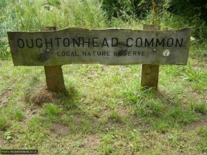 The common and reserve are a great example of a well-managed local resource