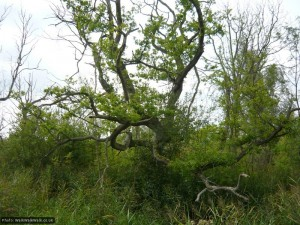A gnarled old tree clings on in unpromising terrain