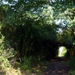 The path leaves the railway behind and heads for the fields