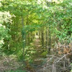 You can choose to walk through this coppice or stick to the field edge