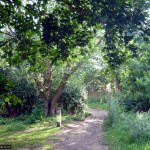 This side path takes you to Wymondley Wood