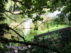 A glimpse of the fishing lake through the trees