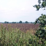 Looking north east across the fields