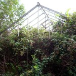Brambles colonise the empty skeleton of a glasshouse