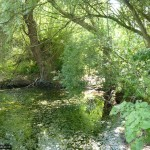 Gerry's Hole is a haven for aquatic plants, insects and wildlife