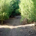 The path dodges into woodland to avoid following a dangerous road