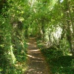 At this point, the path is an ivy-strewn trail between gardens