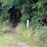 Leave the main path and head into this gap in the trees
