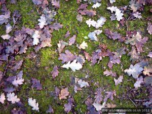 Last autumn's leaves lie on the ground