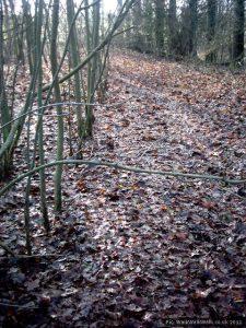 Plantation-straight lines