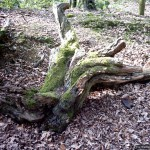 Sculptural root with moss