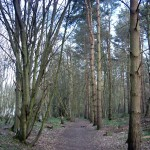 Path along the wood's northern edge